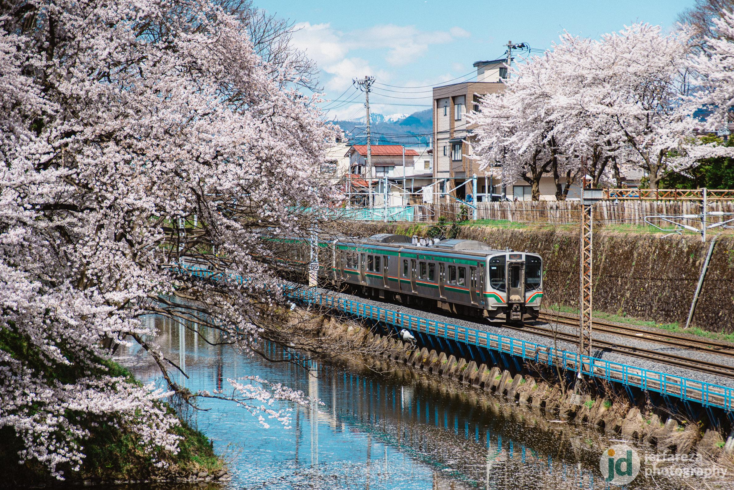 Sakura in Yamagata City